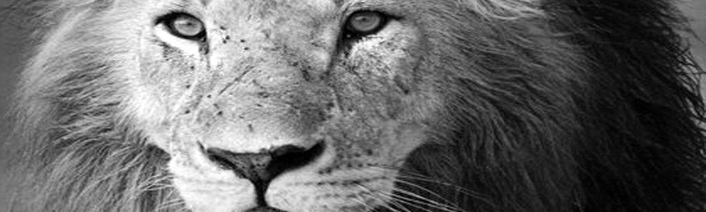 ``El León de la tribu de Judá``