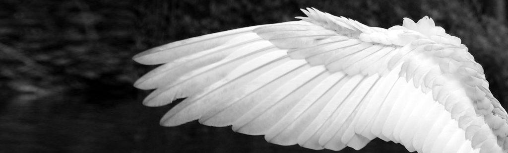 ``Los ángeles de Dios acampan alrededor de ti``